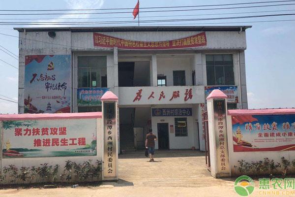 农村村委会选举政策