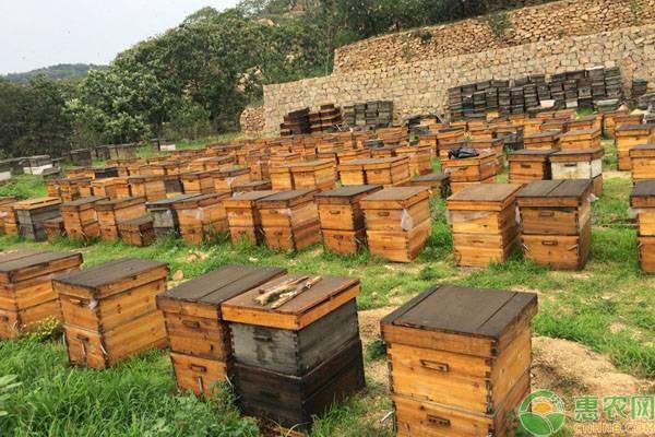 意蜂养殖管理