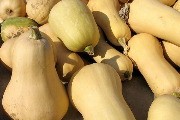奶油南瓜是转基因的吗?多少钱一斤?奶油南瓜和普通南瓜的区别