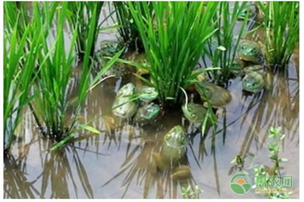 现在农村青蛙养殖前景如何?2019青蛙养殖成本和利润