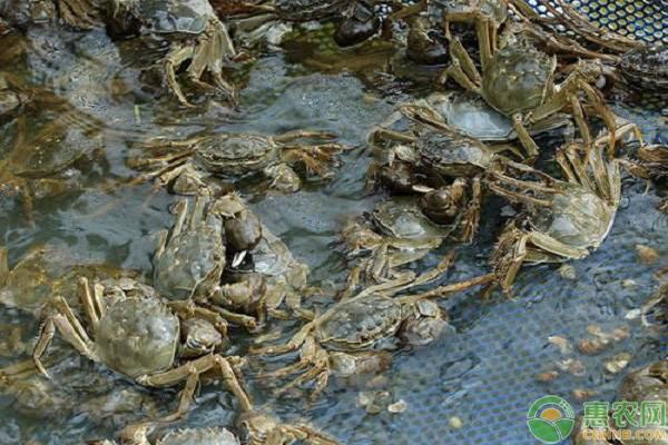 我国有哪些大闸蟹品种?