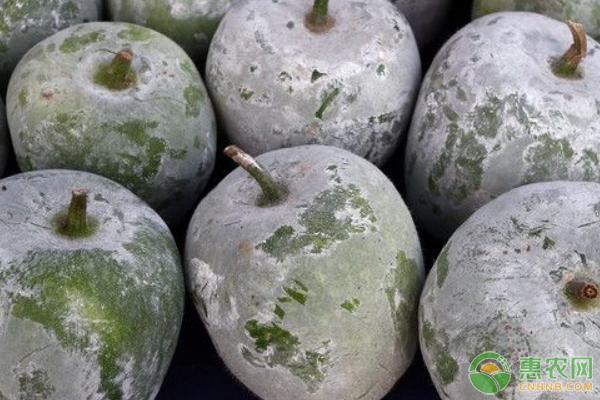 冬瓜的优良品种介绍