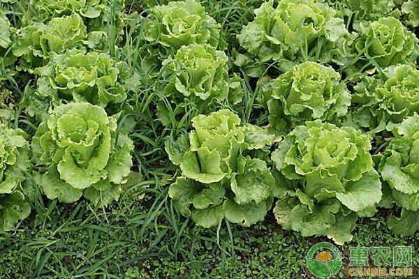 八月种植什么?这五大蔬菜产量高,经济效益可观!