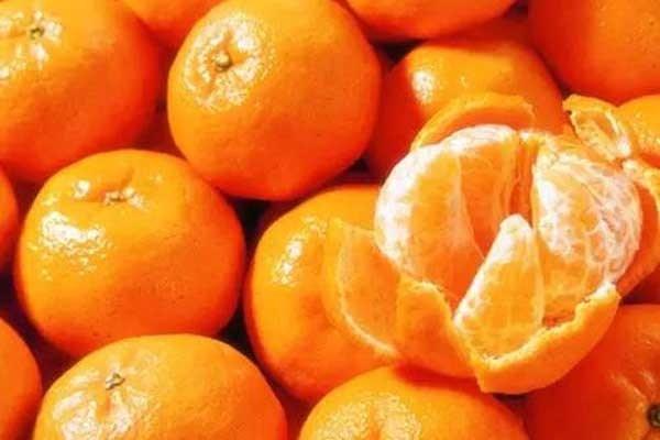 金秋砂糖橘这个品种怎样?好不好种?