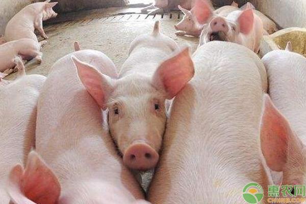 土杂猪价格