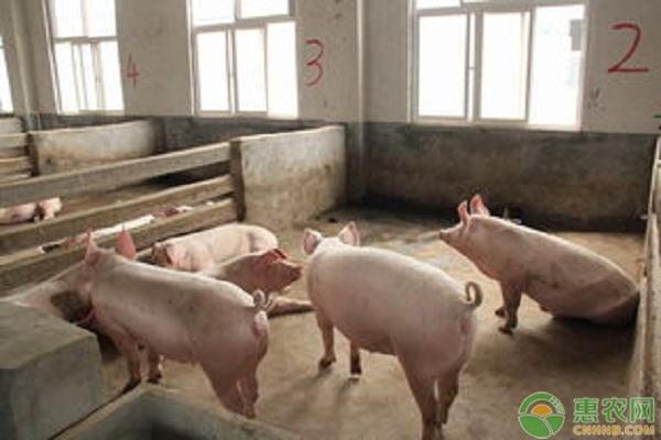 土杂猪价格多少钱一斤