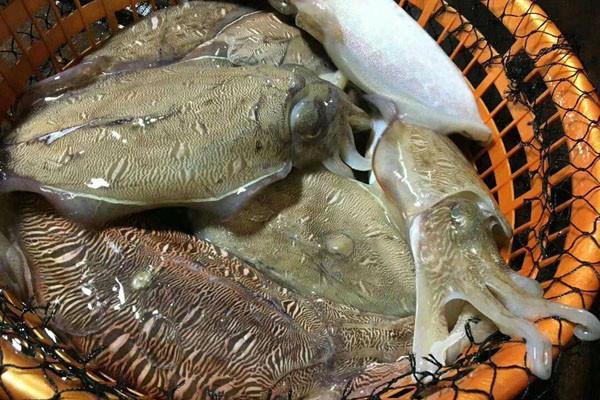 深水墨鱼多少钱一斤?有什么功效作用及食用禁忌?