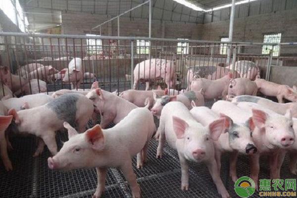 近期厦门猪肉的行情走势