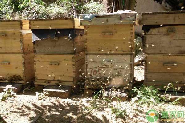 蜜蜂致富道路