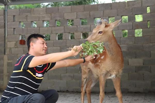 农村这位致富能人,不仅种植特色蔬菜,还养殖梅花鹿!
