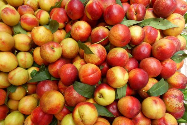 7月份成熟的油桃品种有哪些?