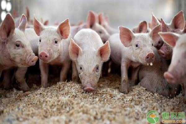 生猪禁养政策解除