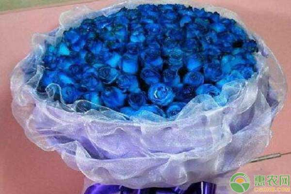 蓝色玫瑰的价格