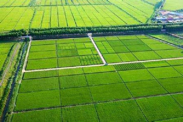 2020年农田有补贴吗?具体政策什么情况?(附补贴申请技巧)