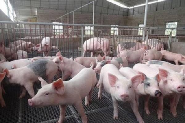 猪肉价格还要涨多久?看看官方是怎么回复的