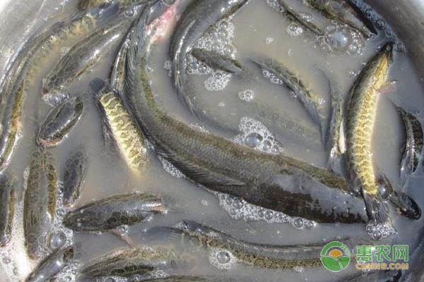 全国海鲜销量排行榜