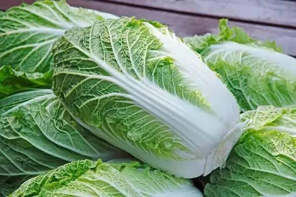 白菜价格多少钱一斤?白菜种植技术有哪些?
