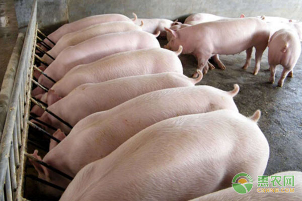最新通知:生猪养殖取消建设用地审批!养猪终成全国最热职业