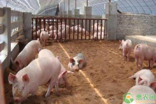 生猪规模化养殖场建设补助
