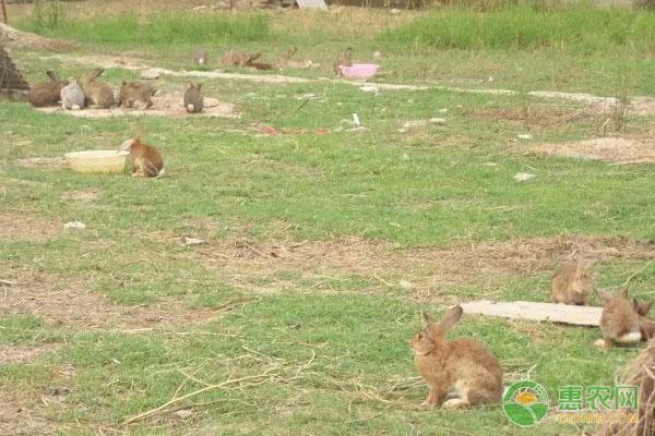种兔价格贵不贵?该如何挑选合格的种兔?