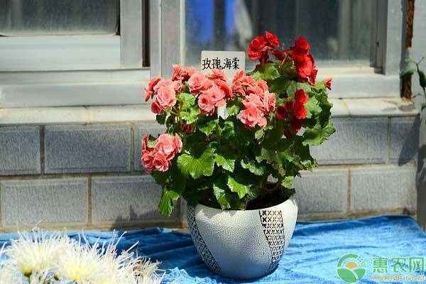 玫瑰花的价格