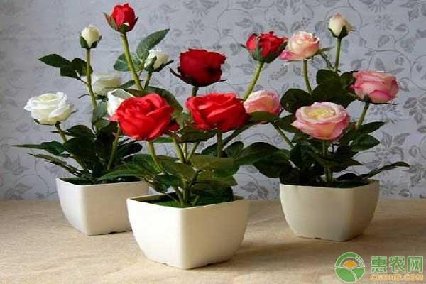玫瑰花的繁殖方法