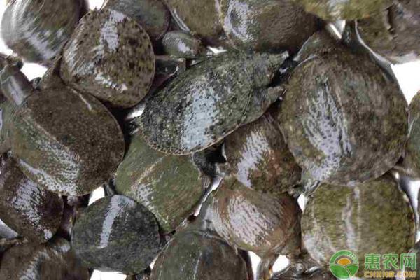 水鱼批发价格多少钱一斤
