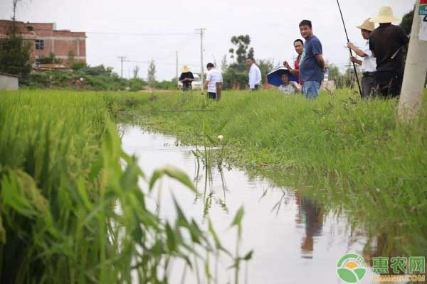 谷花鱼项目发展