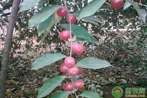 农村种植哪些水果可以致富?这五大水果市场行情好!