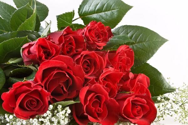 两大学生创业种植玫瑰,深受市场欢迎,一年销售额达500万!