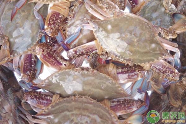 梭子蟹价格多少钱一斤