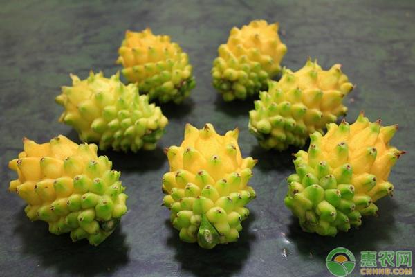 黄皮火龙果的种植技巧
