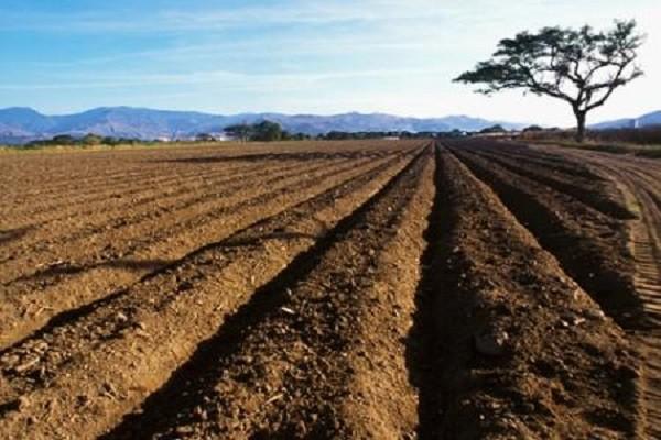 农村土地承包合同应该跟谁签?村委会有权对外签订承包合同吗?