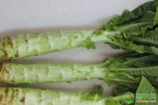 莴笋茎部开裂的原因及预防措施