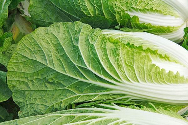 国庆前后,蔬菜价格会上涨吗?2019最新蔬菜价格行情预测