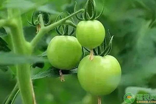 十月适合种植的蔬菜有哪些?要怎么管理?
