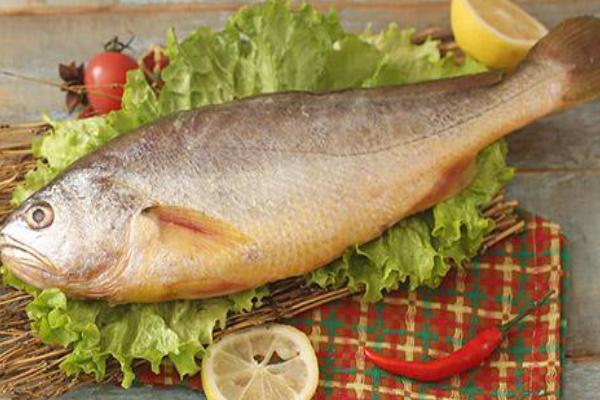 3两东海黄鱼多少钱一斤?东海野生黄鱼为何几乎绝迹?