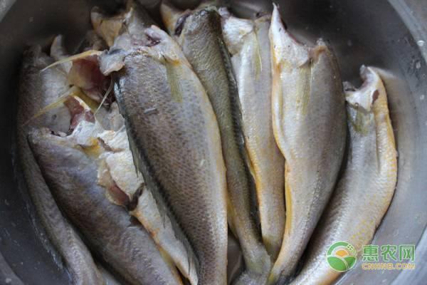 2019大黄鱼多少钱一斤?大黄鱼的营养价值及功效