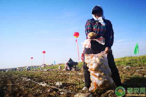 积极推动特色农产品产业升级,惠农网团队助力察右前旗建立专业化品牌