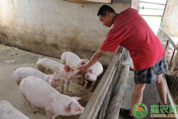 作为养殖合作社,需要做到以下几点!