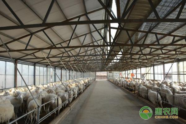 羊舍消毒的方法及注意事项