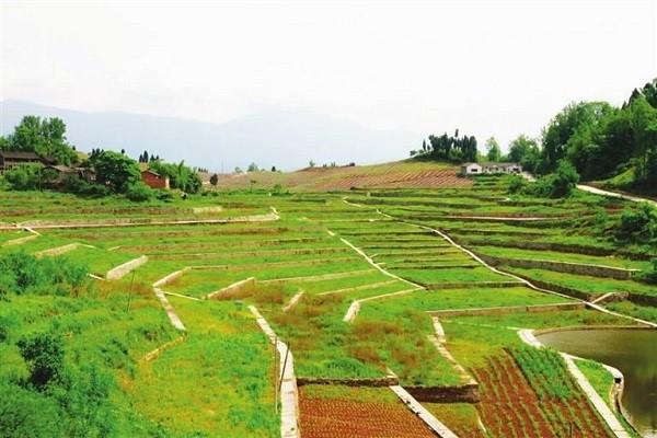通知:农村新增四项补贴比粮补还高,农民朋友的福利来了!