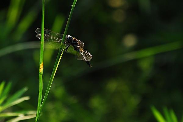 对自然界有益的昆虫介绍,一定要记得!