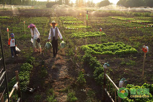 一周热点|中央将进一步投资生猪生产,第一批家庭农场要火!
