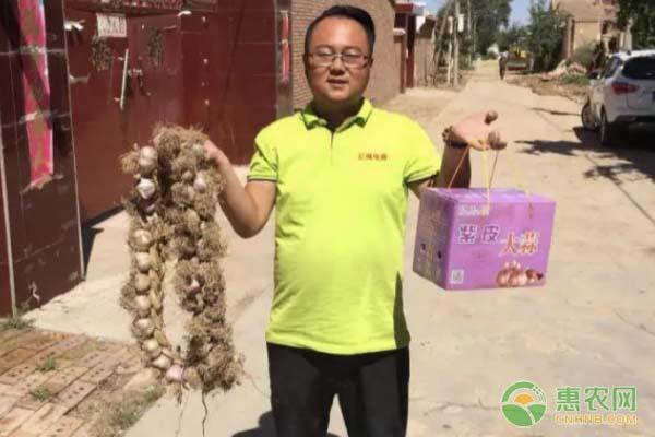 山东金乡县王老板与他种植的大蒜