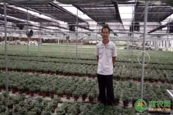 来自湖南祁阳的李老板在自家种植大棚