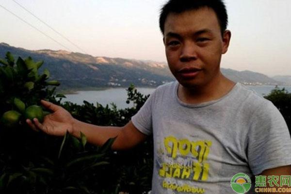 东江湖蜜橘