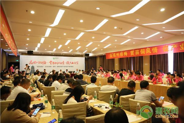 搭建杨梅产销对接平台,惠农网团队助推靖州脱贫攻坚