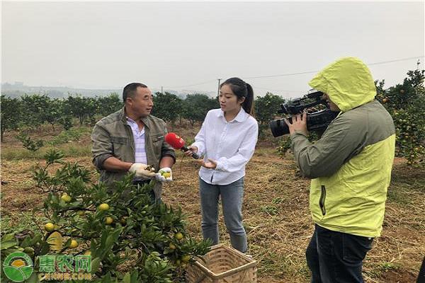 洞口产业示范县携手惠农网,开启雪峰蜜桔品牌运作!