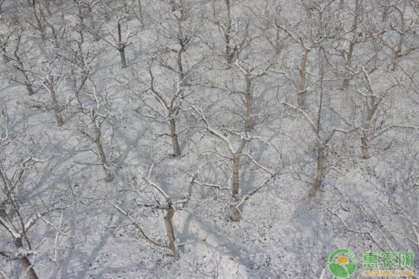 寒露节气的含义是什么?农村寒露节气有哪些习俗?